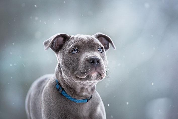 Hundefotografie: Tipps & Tricks